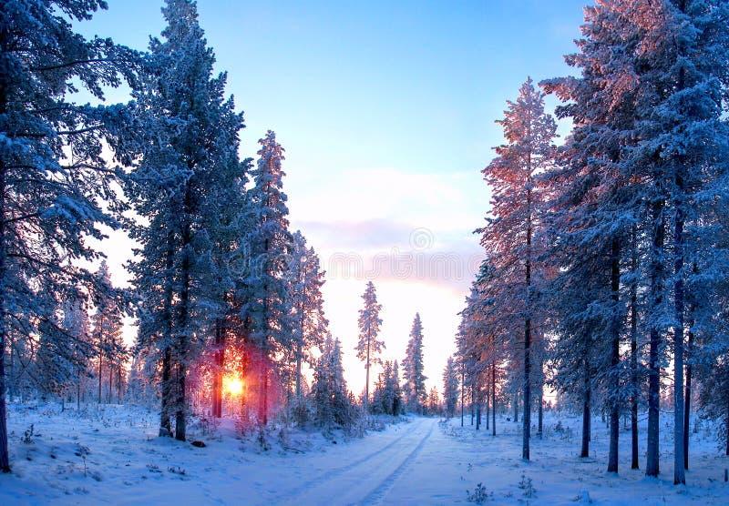 Solnedgång i skogen med vägen som täckas av snö för ligganderussia för 33c januari ural vinter temperatur fotografering för bildbyråer