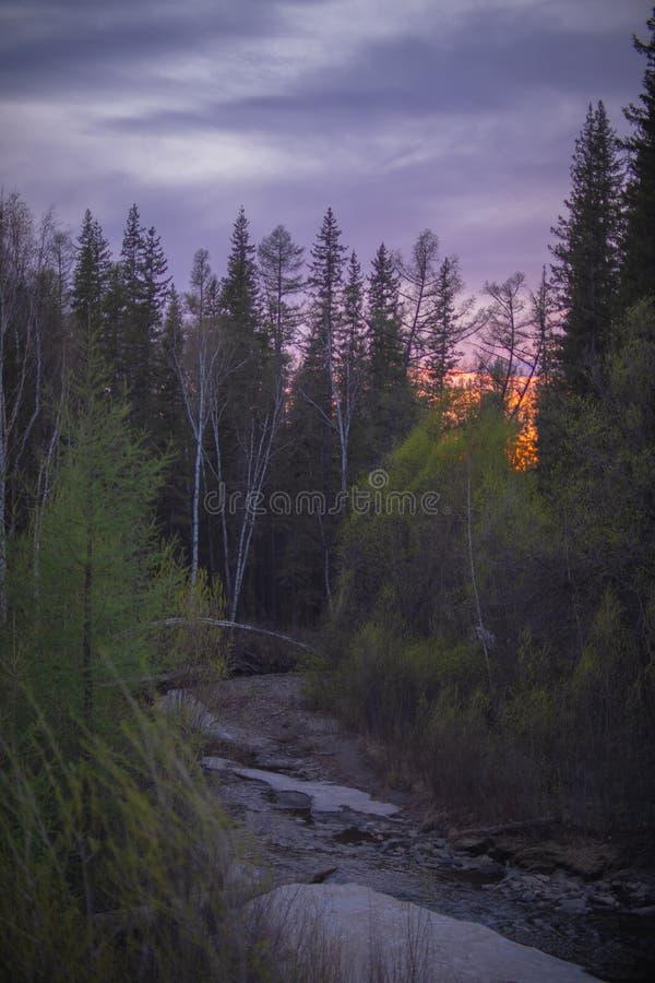 Solnedgång i skogen på våren arkivfoto