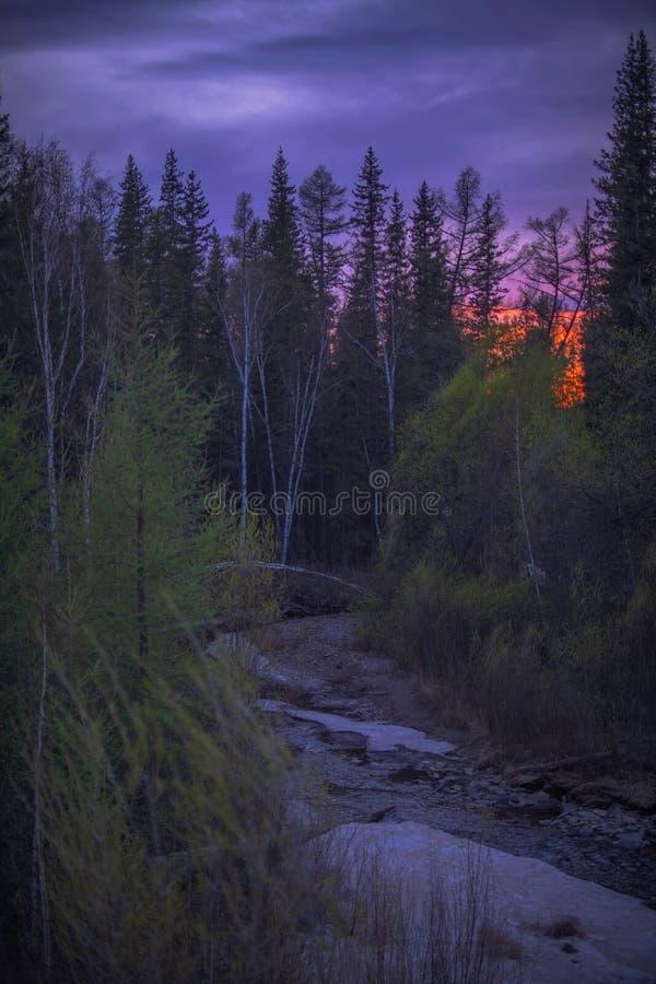 Solnedgång i skogen på våren royaltyfri bild