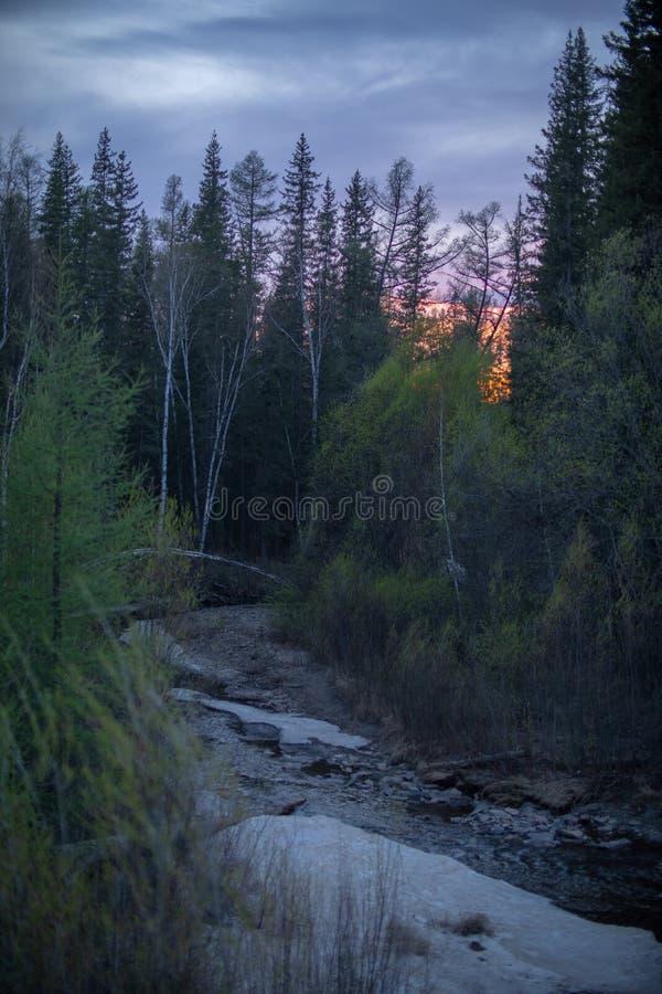 Solnedgång i skogen på våren arkivbild
