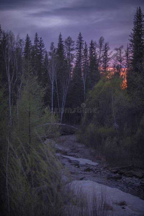 Solnedgång i skogen på våren royaltyfri foto