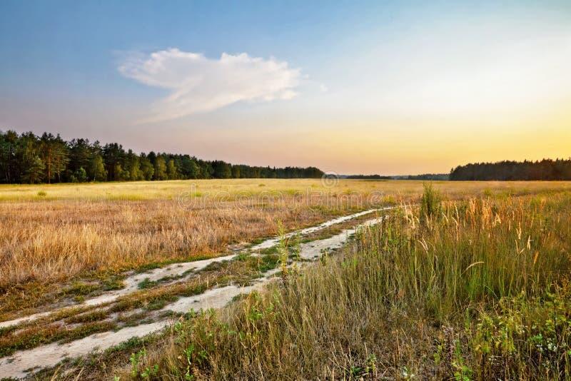 Solnedgång i sommarfält fotografering för bildbyråer