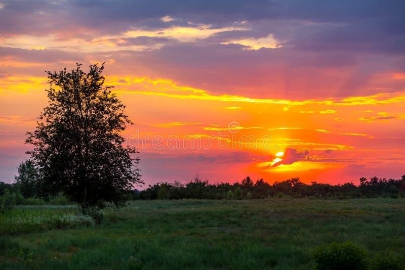 Solnedgång i stäpp royaltyfria bilder