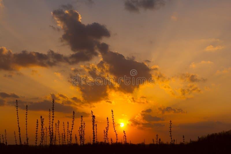 Solnedgång i stäpp arkivfoton