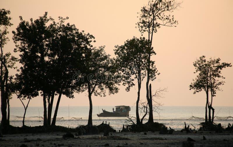 Solnedgång i Sundarbansen royaltyfria foton