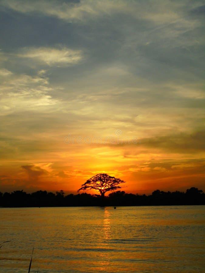 Solnedgång i träd arkivfoto