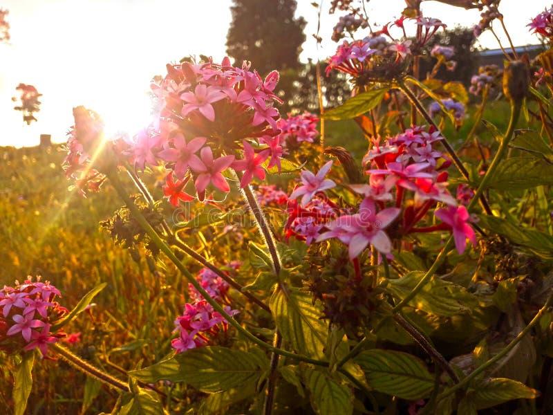 Solnedgång i trädgården arkivbild