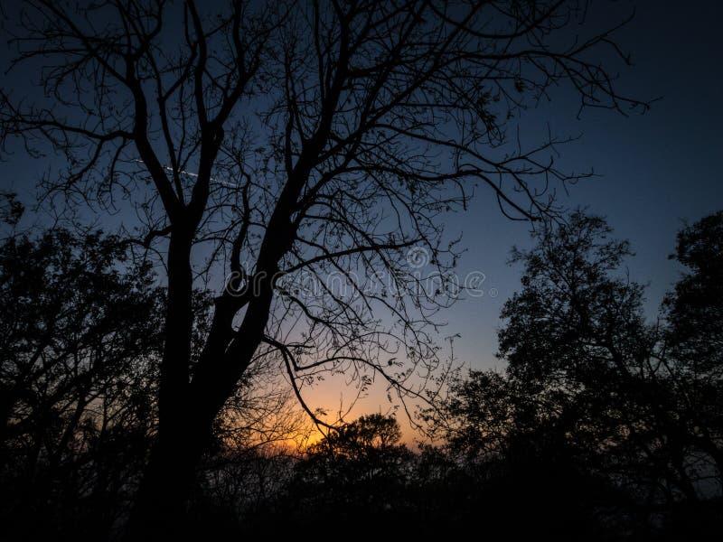 Solnedgång i träna arkivfoto