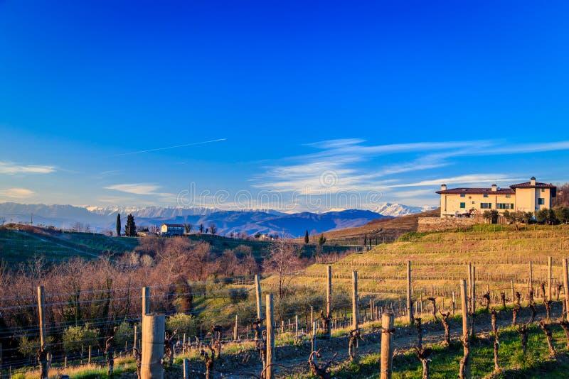 Solnedgång i vingårdarna av Rosazzo arkivfoto