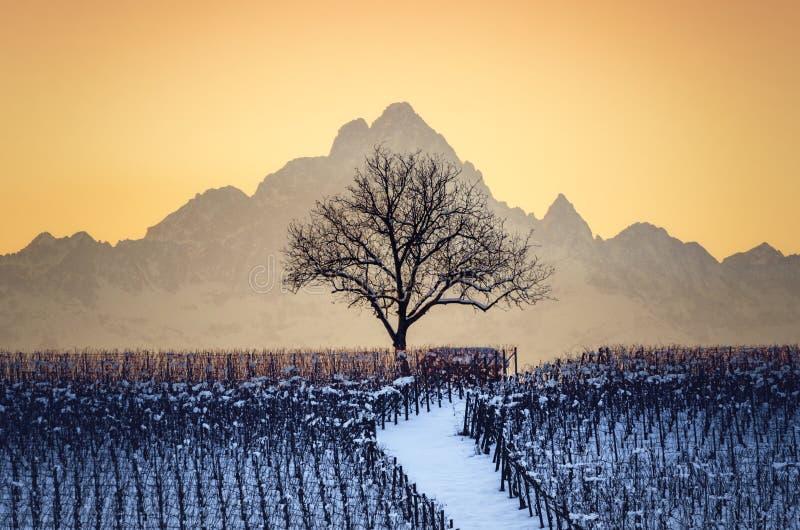 Solnedgång i vinter över vingårdarna av Barolo Langhe, Piedmont, royaltyfri bild