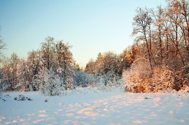Solnedgång i vintern, frost på träd arkivbild