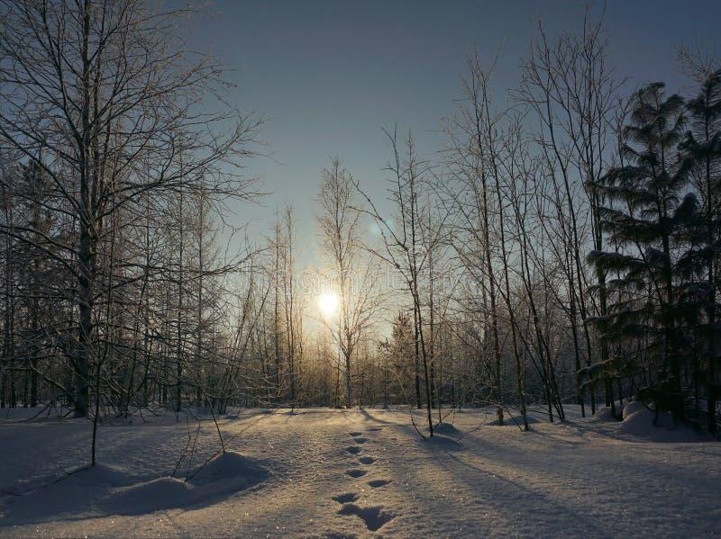 Solnedgång i vinterskogen och fotspår i snön fotografering för bildbyråer