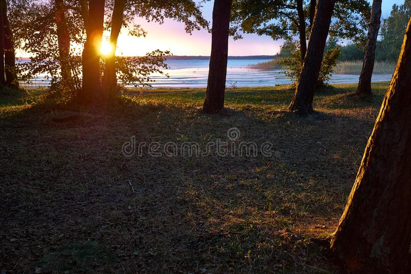 Solnedgång inom den guld- timmen på en sjö nära Berlin med solen som skiner i mitt av två träd Sned boll som skjutas från glade s arkivbilder