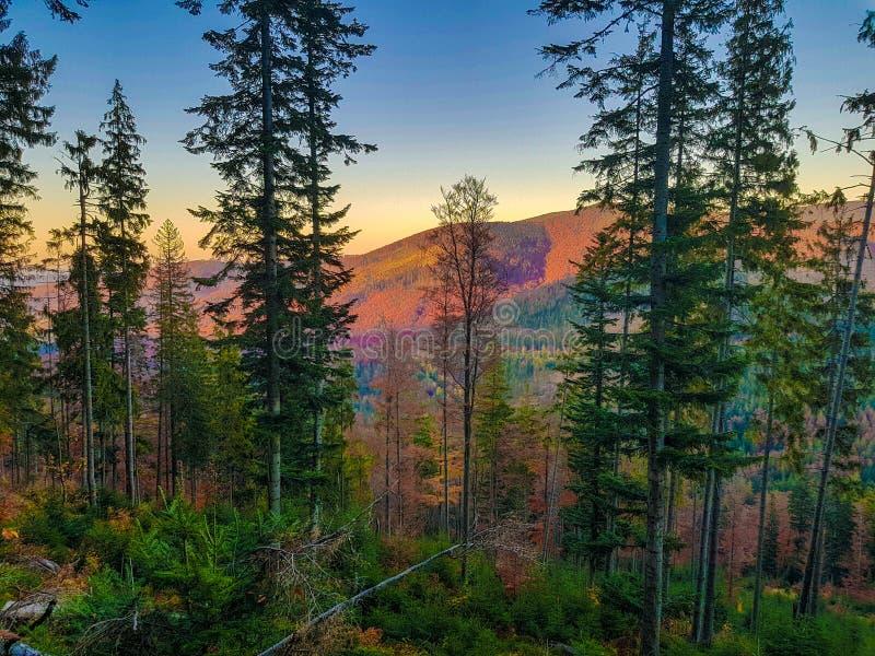 Solnedgång med bergskoglandskapet, Babia Gora, Polen royaltyfri foto