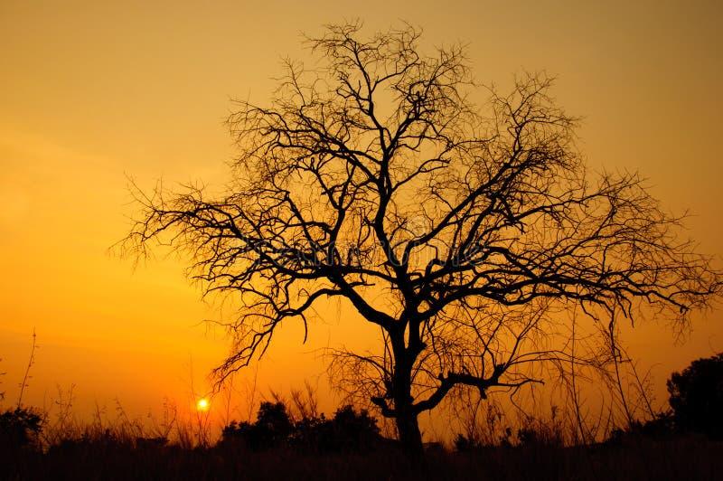 Solnedgång med den döda treen arkivfoton