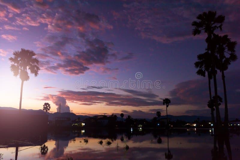 Solnedgång med det små dammet och palmträd royaltyfri fotografi