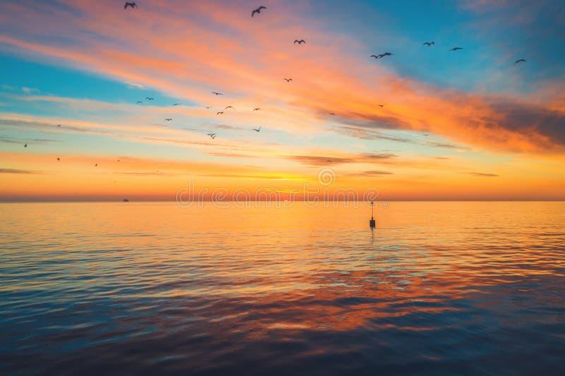 Solnedgång med dramatiska moln över havssjön och flygaseagulls och vattenänder i himlen royaltyfria bilder