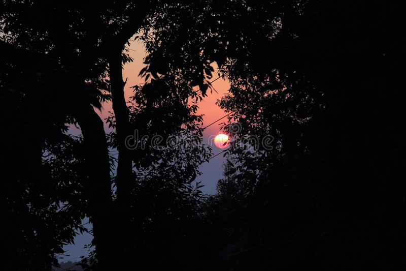 Solnedgång med ett blad av trädet på solen royaltyfria bilder