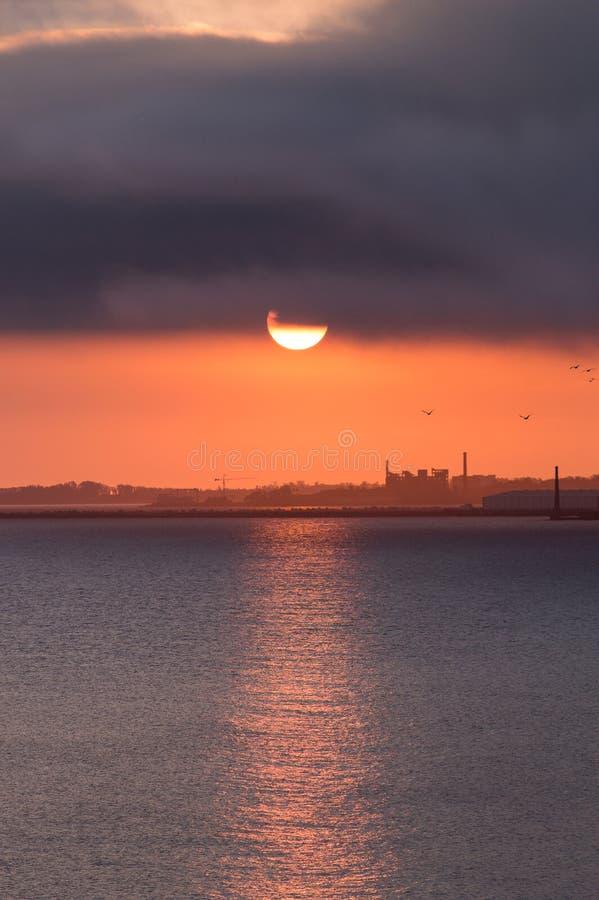 Solnedgång med fåglar arkivfoto