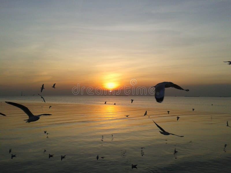 Solnedgång med havsfiskmåsen på Bangpu Thailand royaltyfri fotografi