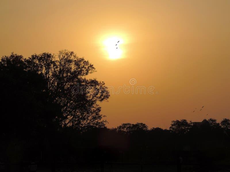 Solnedgång med några fåglar och träd royaltyfri fotografi