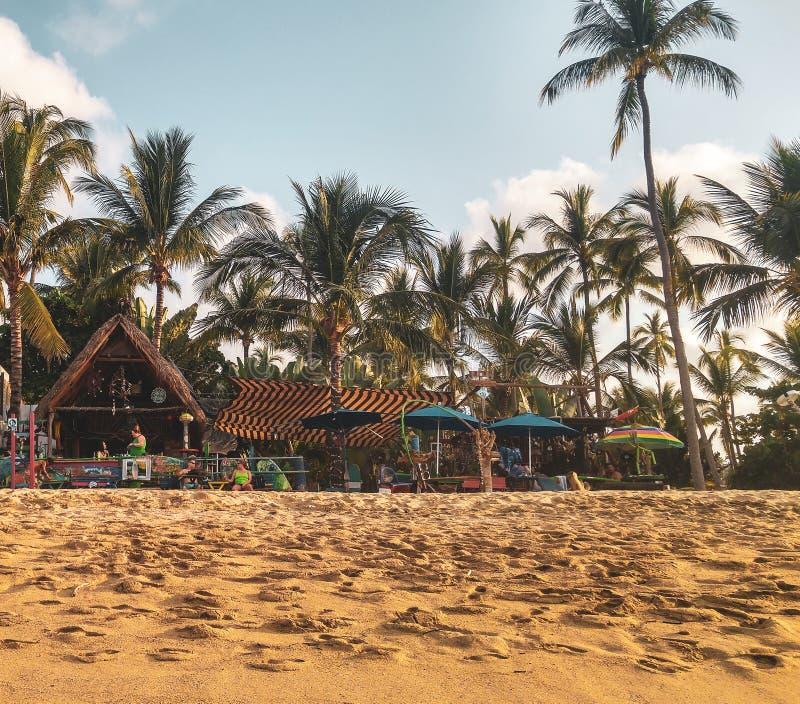Solnedgång med palmträd i den Sayulita stranden arkivbild