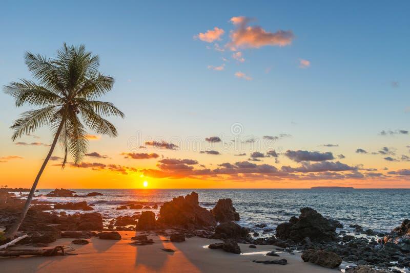 Solnedgång med palmträdkonturn, Costa Rica arkivbilder