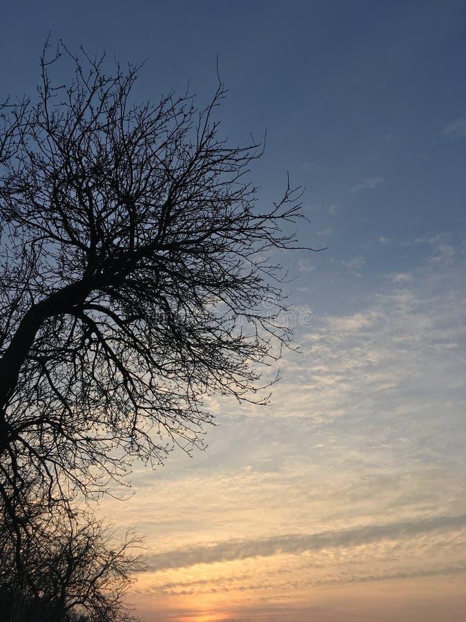Solnedgång med treen arkivfoton