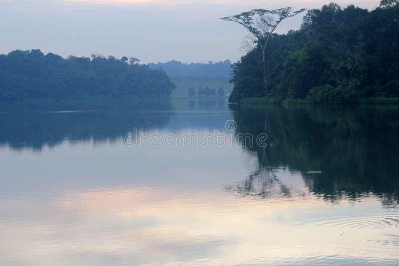 Solnedgång med vattenreflexion i regnskog i Singapore arkivfoton