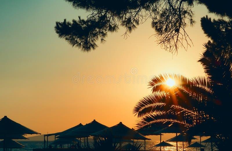 Solnedgång mellan paraplyer och palmträd på kusten av Izmir det aegean havet royaltyfri fotografi