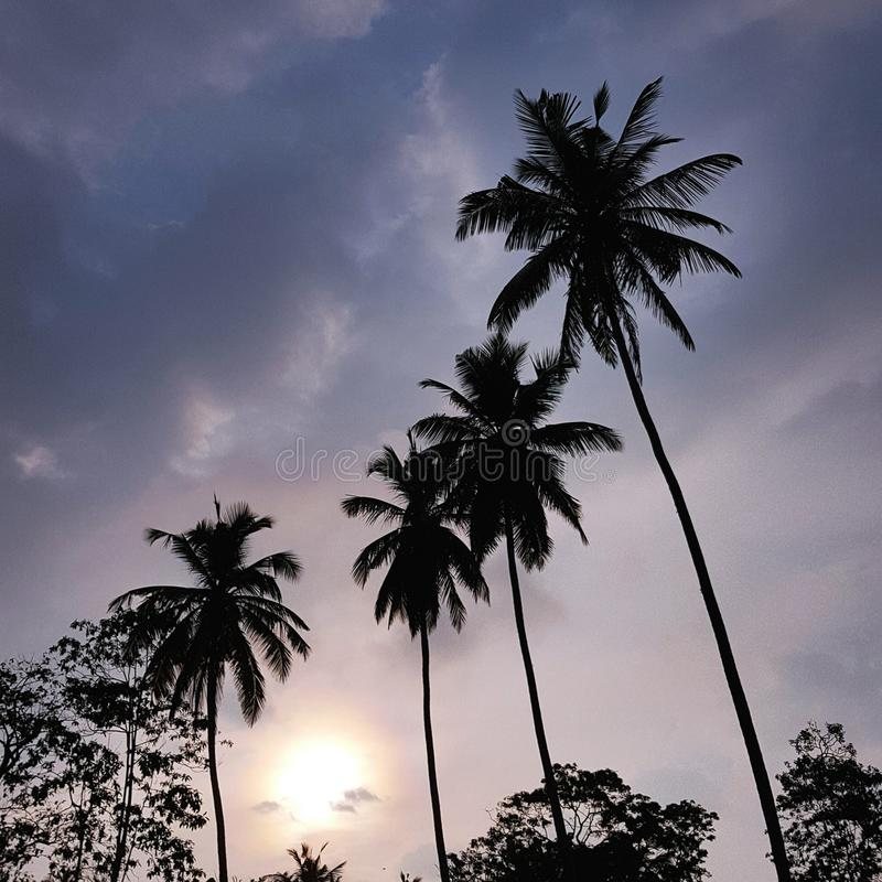 Solnedgång mellan träden fotografering för bildbyråer