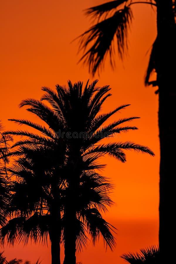 Solnedgång nära av stranden av San Fernando royaltyfria bilder