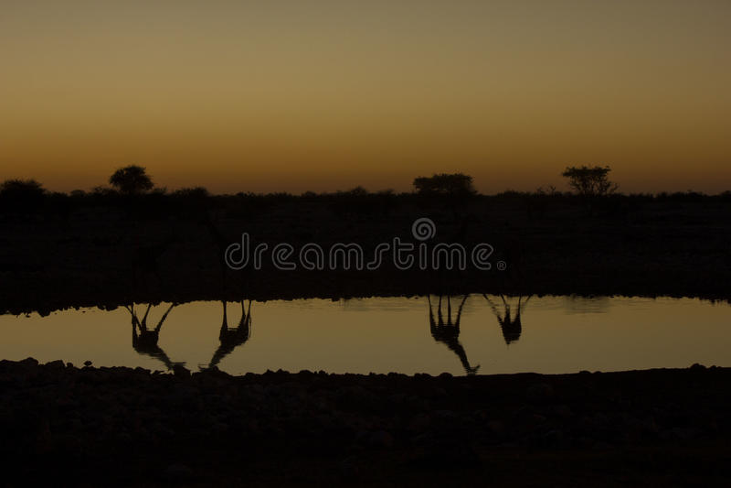 Solnedgång Namibia royaltyfri fotografi