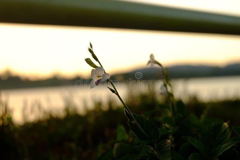 Solnedgång och blomma royaltyfria bilder