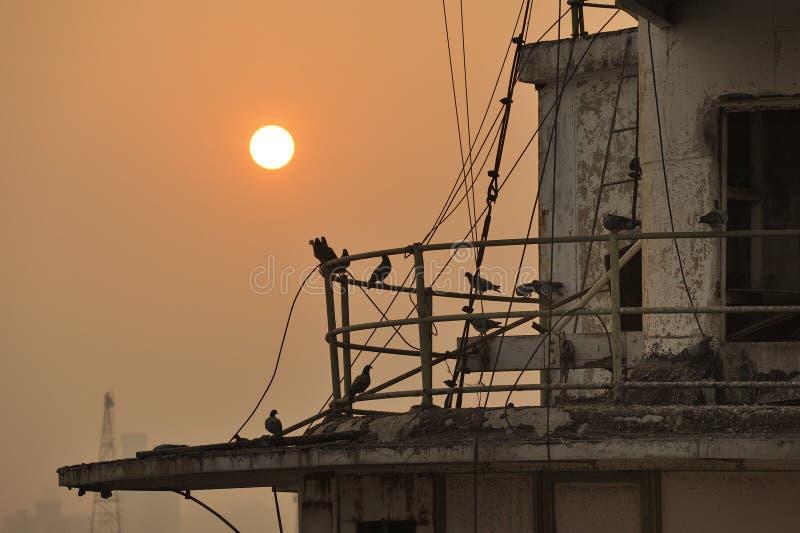 Solnedgång och duvorna royaltyfri fotografi