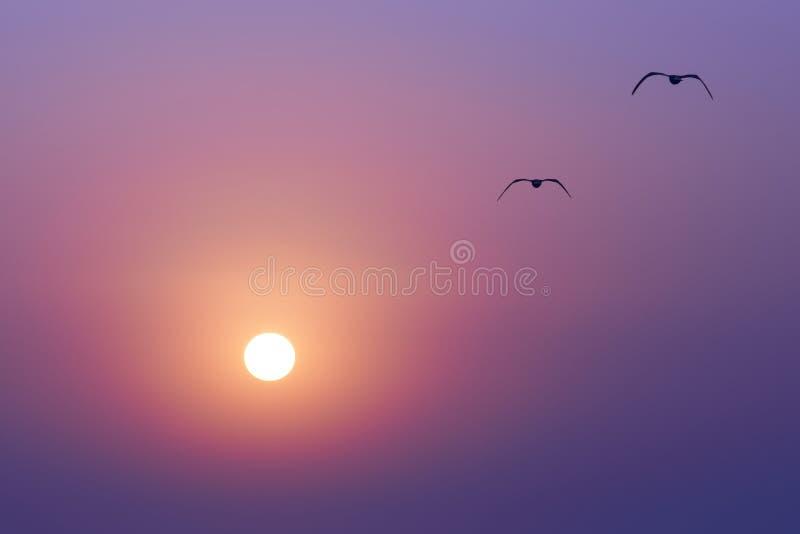 Solnedgång och seaguls arkivfoto