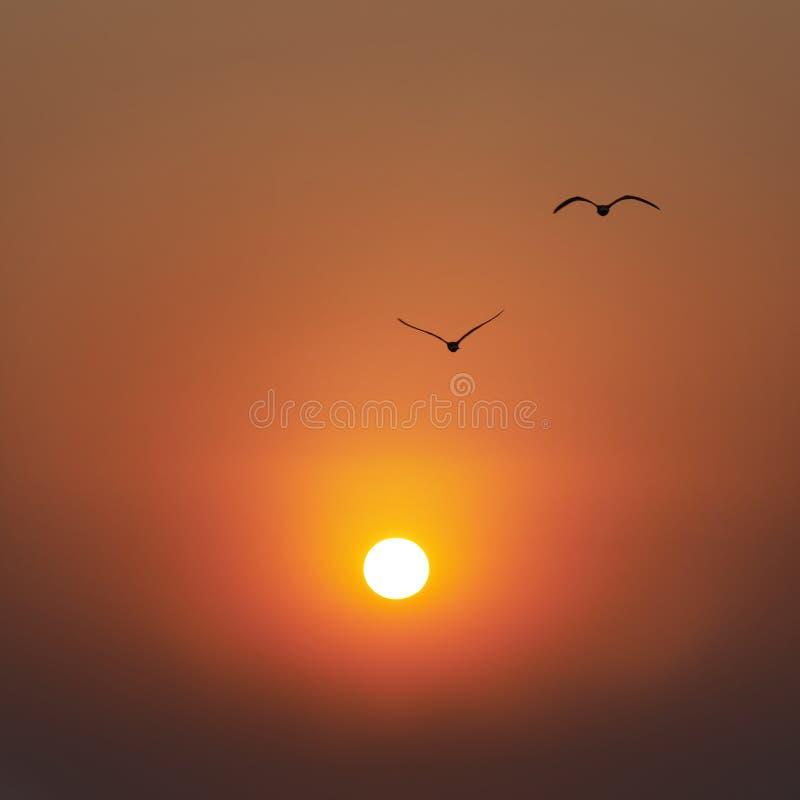 Solnedgång och seaguls fotografering för bildbyråer