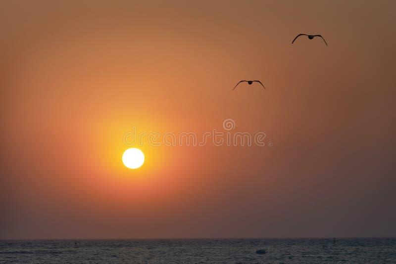 Solnedgång och seaguls arkivbilder
