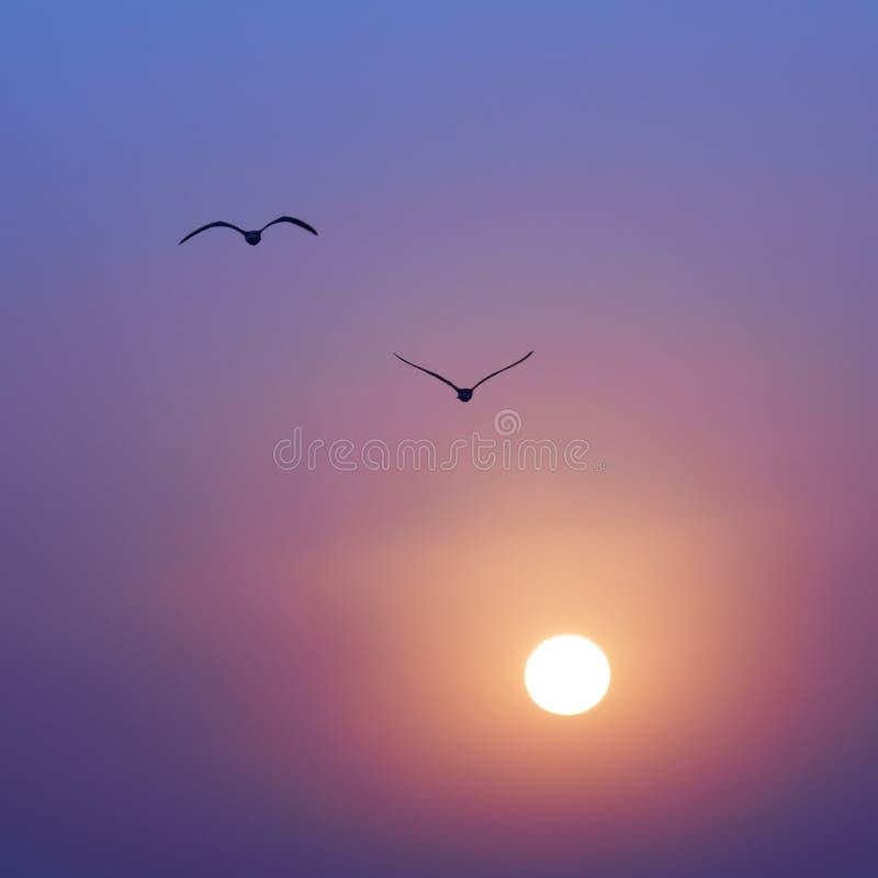 Solnedgång och seaguls royaltyfri fotografi
