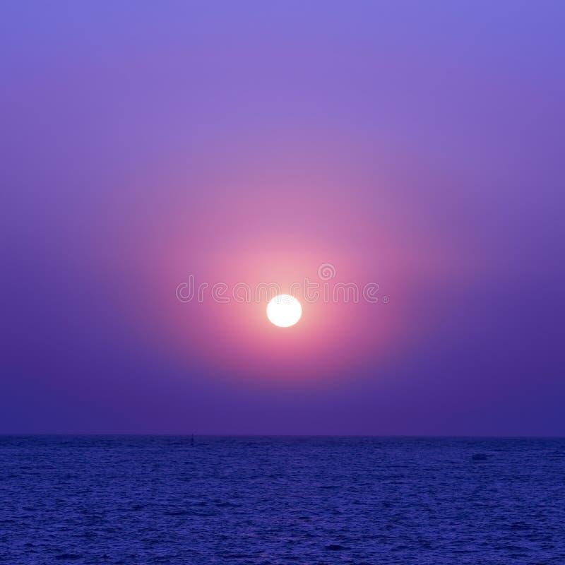 Solnedgång och seaguls royaltyfri foto