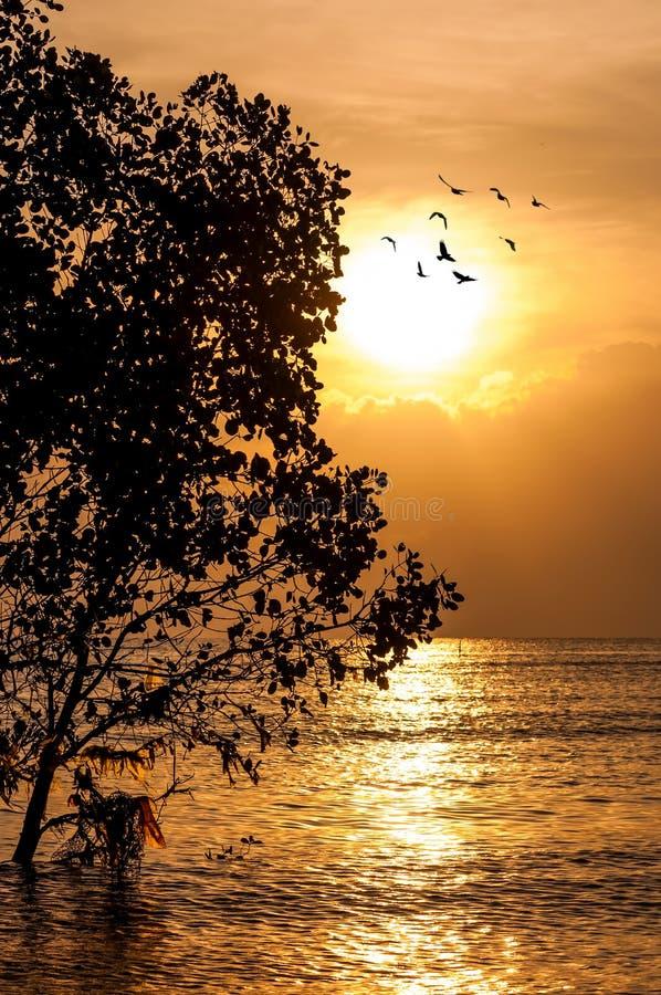 Solnedgång och stranden fotografering för bildbyråer