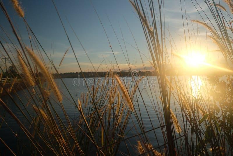 Solnedgång och tree arkivfoto