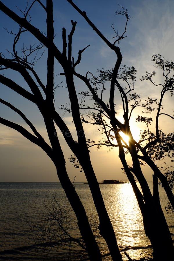 Solnedgång och tree arkivbilder
