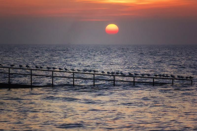 Solnedgång ovanför havet och seagullsna fotografering för bildbyråer