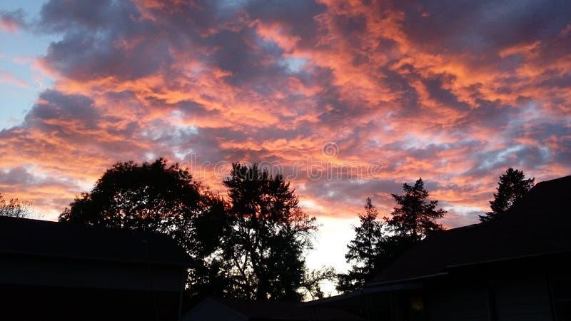 Solnedgång ovanför träden royaltyfria bilder