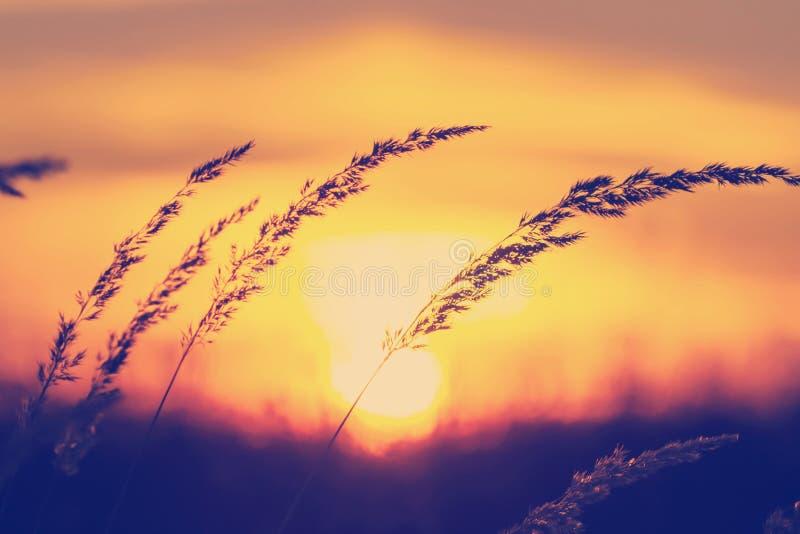 Solnedgång på ängen för gräsfält royaltyfria foton