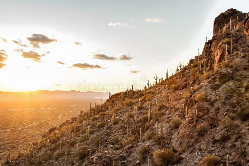 Solnedgång på berget i Tucson AZ USA royaltyfria bilder