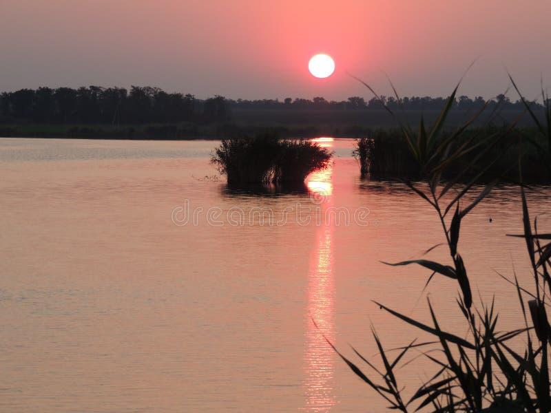 Solnedgång på dammet royaltyfri fotografi
