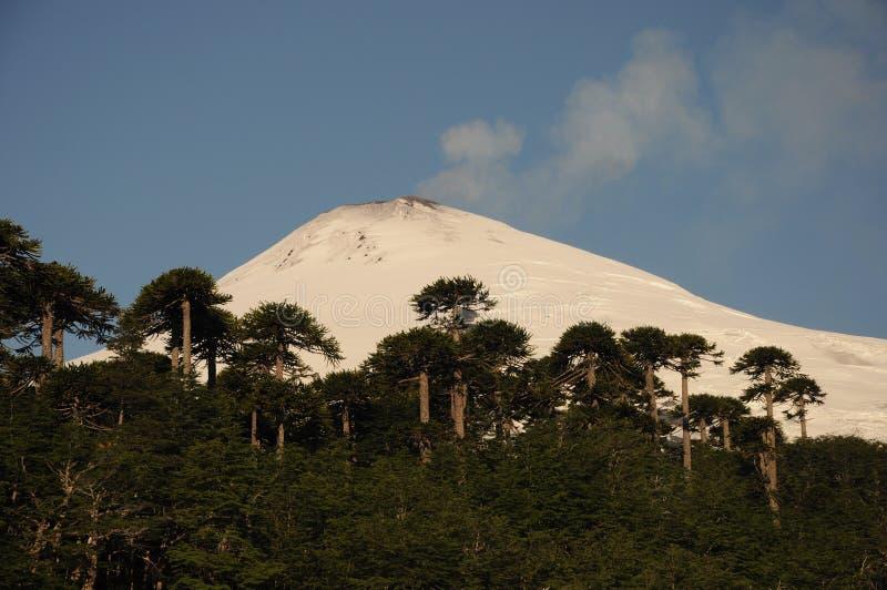 Solnedgång på den aktiva vulkan Villarica i Pucón, sydliga Chile Araucariaaraucanaträd framme Dold vulkan f?r sn? royaltyfri foto