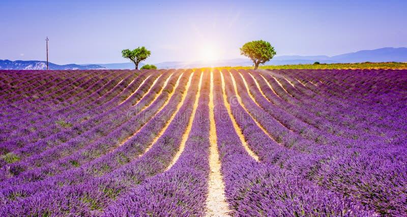 Solnedgång på det purpurfärgade lavendelfältet i Provence, Frankrike Sommarlandskap med ljusa och purpurfärgade färger royaltyfri fotografi